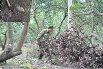Tàn độc với rừng
