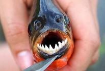 """""""Điểm mặt"""" 5 loài sinh vật ngoại lai gây mối nguy cao"""