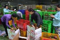 Thị trường Trung Quốc thay đổi, nhiều doanh nghiệp Việt lao đao