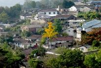 Hàn Quốc: Bố chồng giết chết con dâu người Việt