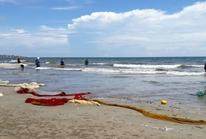 Hải sản chết bất thường ở Bình Thuận là do thời tiết?