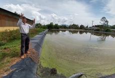 Trại nuôi heo xả thải ra hồ cấp nước