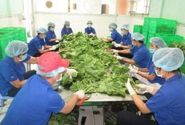 TP HCM tăng cường kiểm soát thực phẩm theo chuỗi