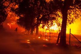 Cháy rừng California: Chỉ còn tro và xương