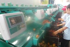 Bị phạt hơn 100 tỉ đồng do vi phạm an toàn thực phẩm