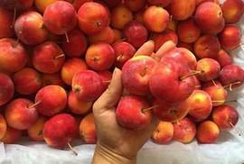 5 loại táo Trung Quốc đang bán đầy chợ Việt, người mua dễ nhầm lẫn