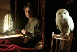 """""""Harry Potter"""" khiến loài cú ở châu Á gặp nguy hiểm"""