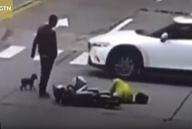 Chủ bị đụng xe, chó cưng đuổi theo chặn đường xe gây tai nạn