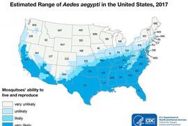 """Ngành y tế Mỹ cũng """"đau đầu"""" vì muỗi Aedes"""