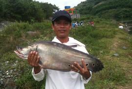 Câu được cá thác lác 7 kg