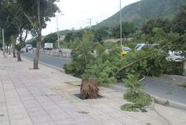 Gió nhẹ, cây mất gốc đổ đè người: Ai chịu trách nhiệm?
