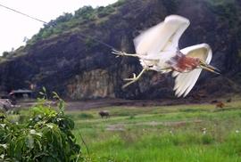 Ám ảnh với những hình ảnh săn chim trời ở Hà Tĩnh
