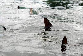 Đặc nhiệm SEAL tiết lộ kỹ năng sống sót trước hàm cá mập
