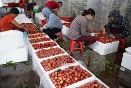 """Nhiều trái cây Việt """"vô hình"""" ở nước ngoài"""