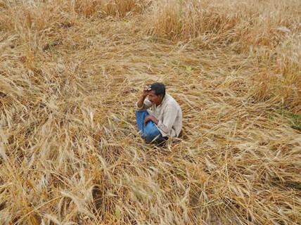 Ấn Độ: Trời nóng, nông dân tự tử nhiều hơn?
