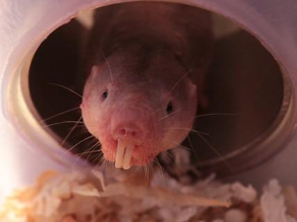 Kinh ngạc loài vật có khả năng sống không cần oxy