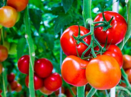 Muốn ngừa ung thư hiệu quả thì ăn nhiều 6 loại thực phẩm này