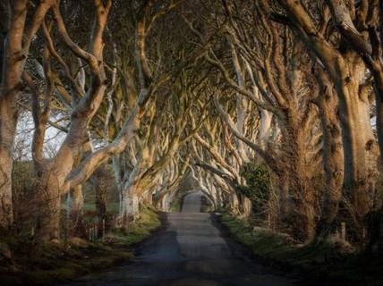 """Con đường ma mị trong """"Game of thrones"""" thành điểm tham quan nổi tiếng"""