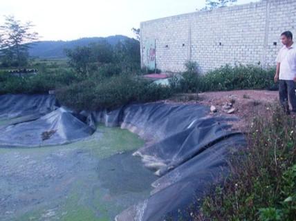 Đi chăn bò, bé gái 9 tuổi rơi xuống hồ biogas tử vong