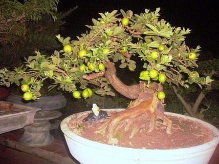 10 loại cây vừa cho ăn trái vừa làm đẹp sân vườn