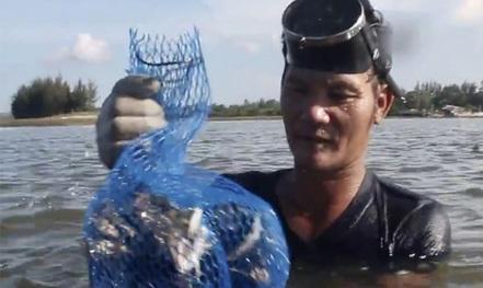 Săn hàu trên sông Trà Bồng