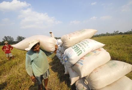 APEC lo suy kiệt nông nghiệp
