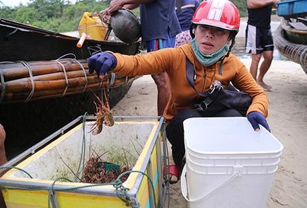 Đuổi bắt tôm hùm dưới đáy biển Quảng Trị