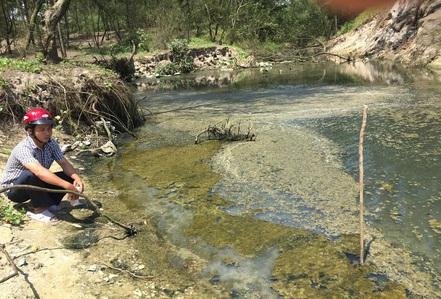 Ô nhiễm trầm trọng vì nuôi tôm ồ ạt