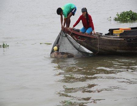 Cá đang được neo ngoài sông, chủ ghe cào nâng cá lên để người dân xem.