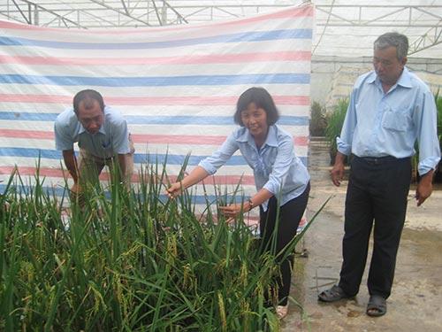 Bà Bạch Thị Vững, Công ty Giống cây trồng miền Nam, đoạt Giải thưởng Tôn Đức Thắng 2013 Ảnh: HỒNG ĐÀO