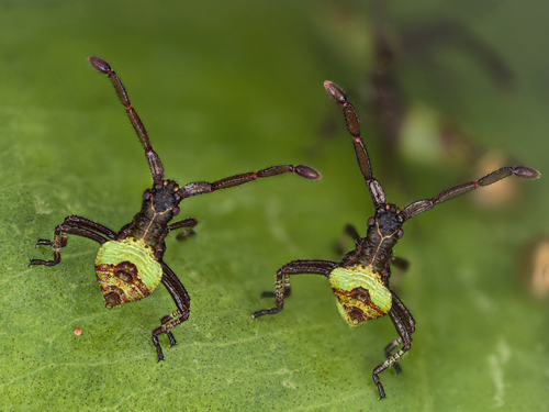 """Hình ảnh này có tiêu đề """"Brother Bugs"""" (Anh em nhà bọ), cho thấy những con bọ mới được 2 giờ tuổi và kích thước chỉ 3 mm. Tác phẩm được trao giải thưởng thứ sáu trong cuộc thi Olympus BioScapes."""
