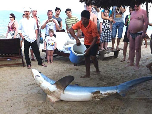 Cá mập phát hiện ở TP Nha Trang được người dân đưa lên bờ.  (Ảnh do bạn đọc cung cấp)