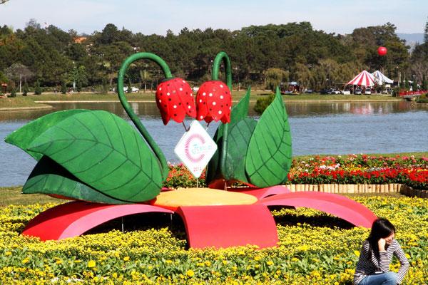 Tiểu cảnh đôi thiên nga trên ruộng hoa ở không gian hoa bên bờ hồ Xuân Hương