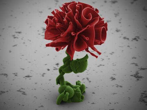 Bông hồng nano