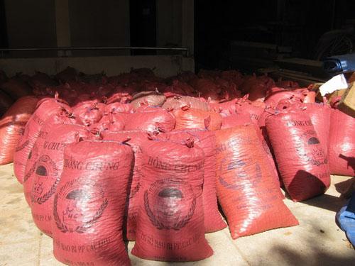 Trái ươi vận chuyển trái phép đang bị tạm giữ tại Hạt kiểm lâm huyện Hoài Ân