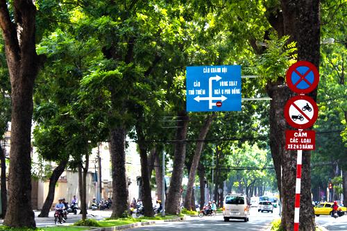 84 cây xanh trên đường Tôn Đức Thắng (quận 1) sẽ bị đốn hạ để xây dựng cầu Thủ Thiêm 2. Ảnh: H.C.