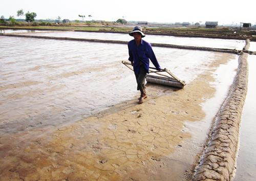 Ruộng muối chỉ đang ở giai đoạn lấy nước, cán nền nên diêm dân ăn Tết rất khó khăn.