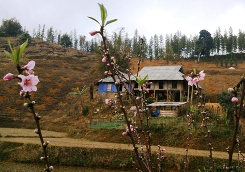 Ở bản Son Bá Mười, xã Lũng Cao, huyện Bá Thước.