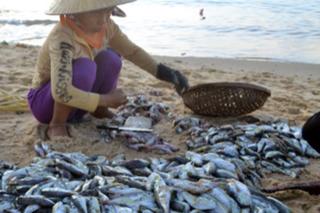 Cá nóc bán ở biển Quy Nhơn