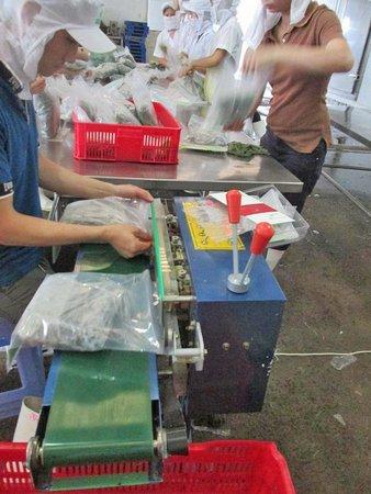 Lá khoai được đóng gói nhãn mác hàng hóa, vô thùng và được giữ ở nhiệt độ ổn định 18oC.(Ảnh do Công ty chế biến cung cấp)