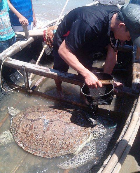 Con rùa biển mắc lưới ngư dân được thả về biển cả
