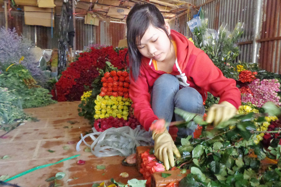 Chuẩn bị hoa hồng phục vụ Valentine tại làng hoa Vạn Thành. Ảnh: lệ Thủy