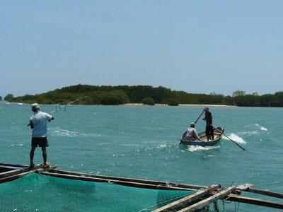 Vùng biển nơi phát hiện cá mập con.