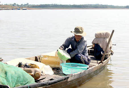 Cá cơm tại Bến Cá, thị trấn Vĩnh An (huyện Vĩnh Cửu) đánh bắt về được thương lái mua hết.