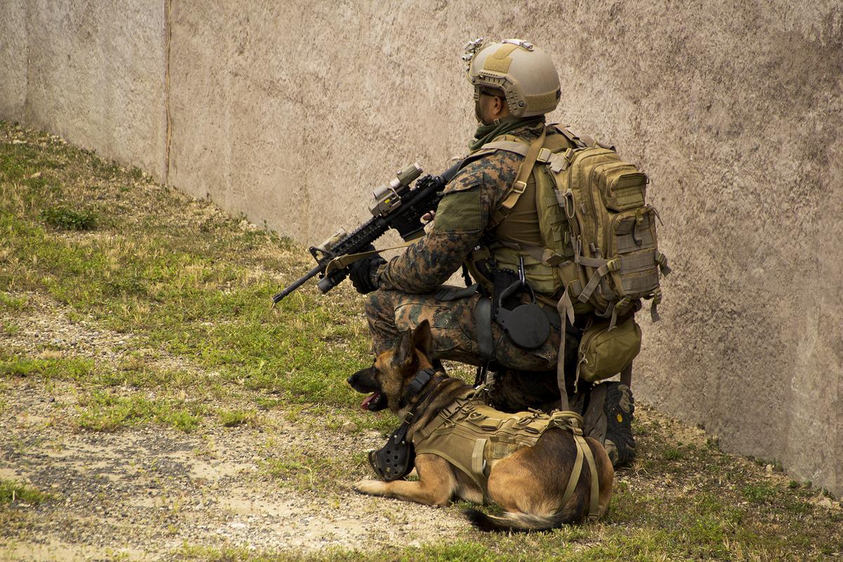 Anh lính thủy lục chiến Mỹ cùng chú chó đang làm nhiệm vụ bảo vệ an ninh