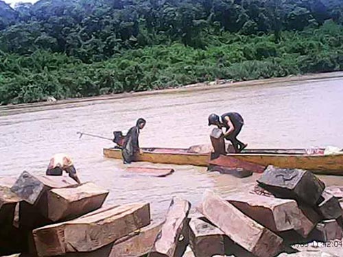Gỗ lậu được vận chuyển từ bên kia biên giới về tập kết tại bến phà 6, sông Pô Cô, huyện Ia Grai, tỉnh Gia Lai