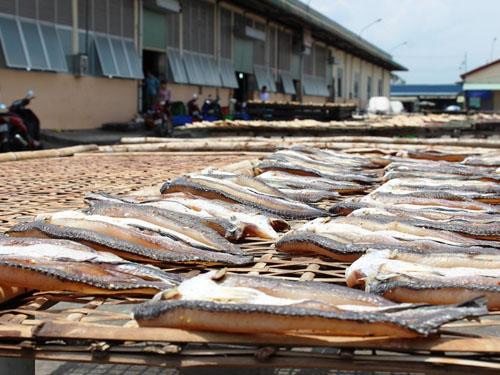 Sau khi luân chuyển lên chợ, một số cá được phơi nắng trước nhà lồng K để tránh tình trạng ẩm mốc.