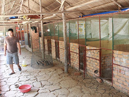 Trang trại của ông Hòa, nơi UBND xã Đa Phước thu gom gà mà không có thông báo, quyết định tịch thu