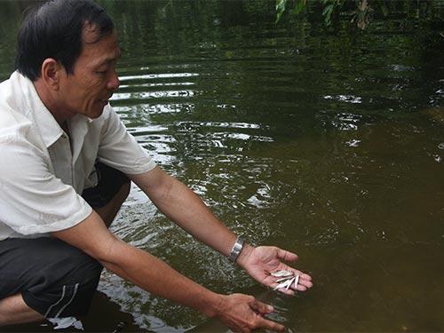 Doanh nghiệp xả thải làm sông ô nhiễm, cá cũng không sống nổi