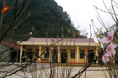 Đào nở thắm trường Phổ thông Cao Sơn.